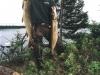 jc-trout1